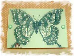 Papillon_calque