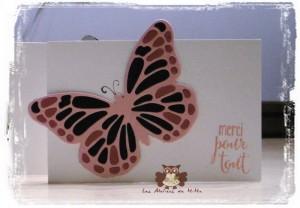 Papillon_c
