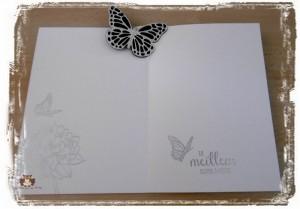 Papillon_b