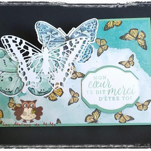 Des papillons… encore et toujours